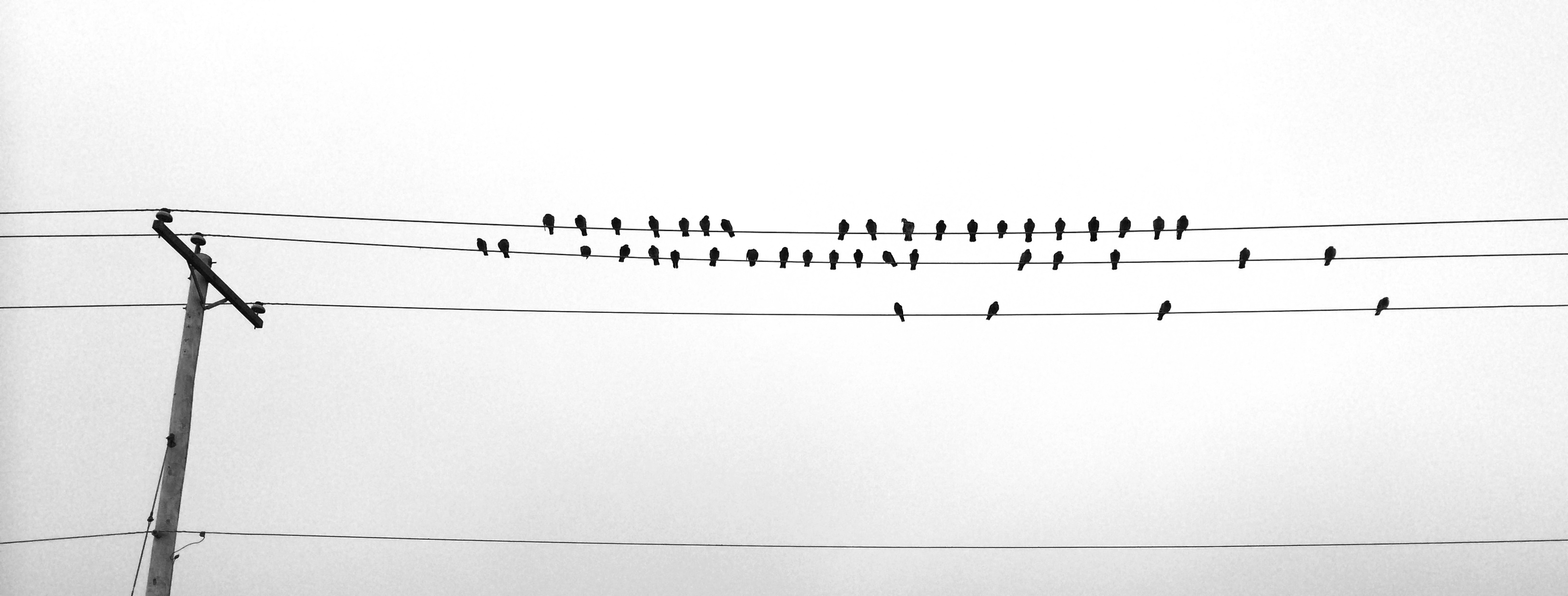 birds-on-wires.jpg
